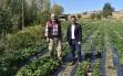 Ekim ayında çilek hasadı Yapılıyor Haberi